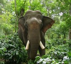 Scientific name for asian elephant absolutely